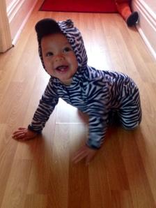 Zebra Boy
