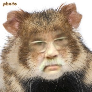 David found a surgeon who could turn him into a hamster. Now he could store his chocolate properly.