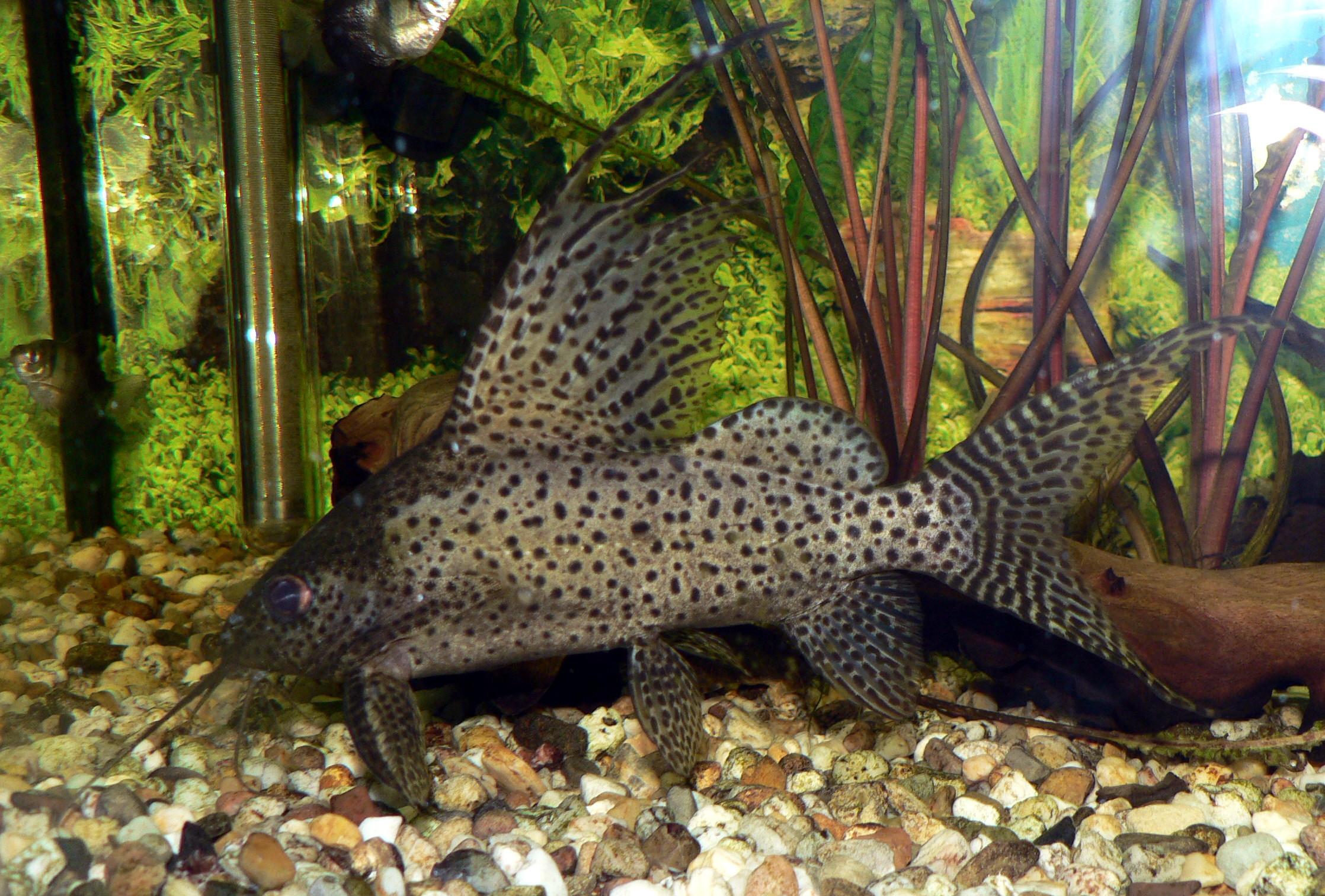 Pipe Cleaner Aquarium Brush Cleaner Kit For Pump/ Pipe Fish & Aquariums Fish Tank Driving A Roaring Trade