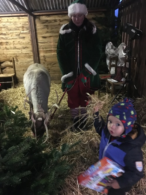'Elf and Safety' bring Rudolf out.
